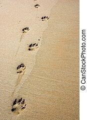 sentier, sable, chien
