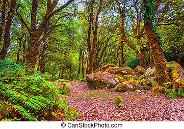 sentier, sommes, forêt, fraigada