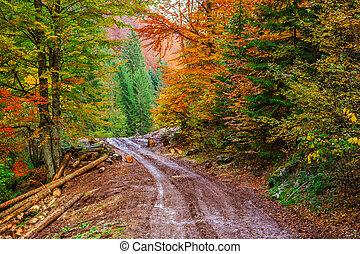 sentiero, attraverso, foresta, colorito, sinuosità