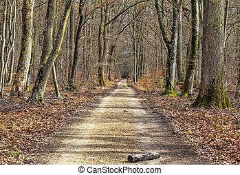 sentiero, foresta