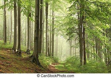 sentiero foresta, in, il, nebbia