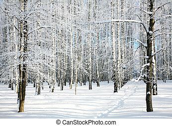 sentiero, inverno, foresta
