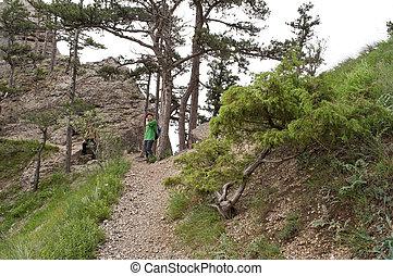 sentiero, montagne, pittoresco