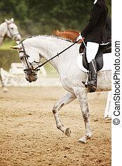 sentiero per cavalcate, cavallo