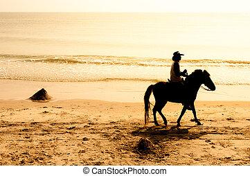 sentiero per cavalcate, cavallo, spiaggia.