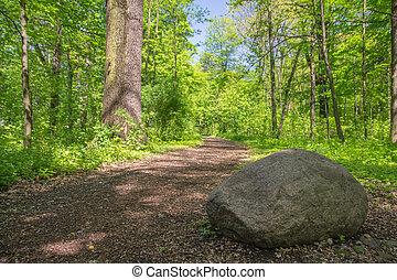sentiero, pietra, soleggiato, foresta, giorno