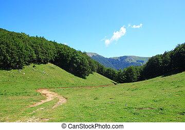 sentiero, valle, verde