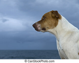 Sentinel - It is about to rain, but the dog stands guard by...
