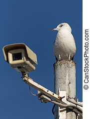 sentinel - seagull on a pole against the sky