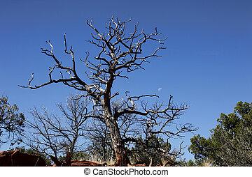 Sentinel Tree and Moon