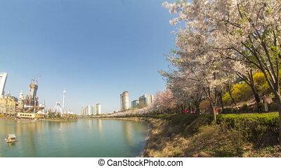 Seoul City 216