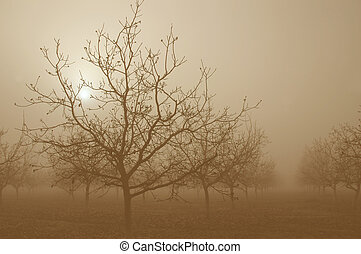 sepia, amanhecer, atrás de, noz, árvores