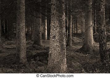 sepia, bosque