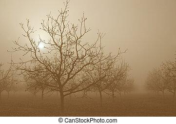 sepia, solopgang, bag efter, valnød, træer
