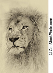 Sepia Toned Lion Face - Sepia Toned Image of a Lion Face