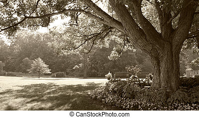 Sepia-toned park scene - Large tree in sepia-toned park...