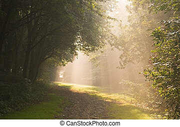 September morning sun
