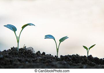 sequência, plantas, fundo, branca, crescendo