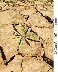 sequía, tierra, en, el, campos, de, cataluña, sequía,...
