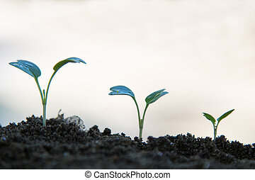 sequence of plants growing in white background
