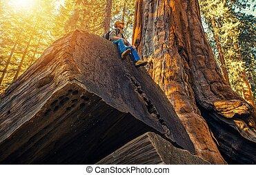sequoia, hiker, floresta