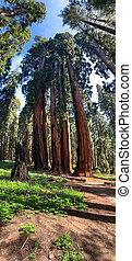 Sequoia National Park in California, USA