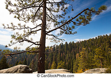 Sequoia National Park Lookout
