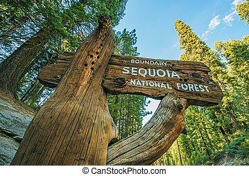 sequoia nemzeti erdő