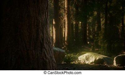 sequoia, summertime, bomen, reus, park, 8k, nationale