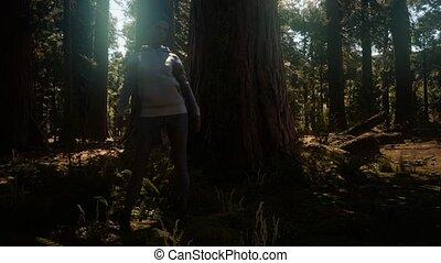 sequoia, yosimite, vrouw, park, nationale