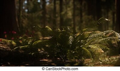 sequoias, mariposa, vroege morgen, zonlicht, bosje