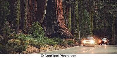 sequoias., nationale, straat, onderzoek, park, enorm