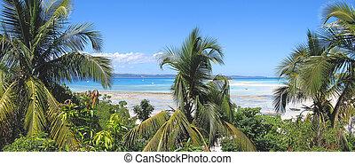 ser, madagascar, isla, fisgón, árboles, panoramique, arena, palma, iranja, banco