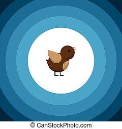 ser, pássaro, usado, pardal, apartamento, concept., pardal, isolado, elemento, pássaro, vetorial, desenho, lata, icon., asa
