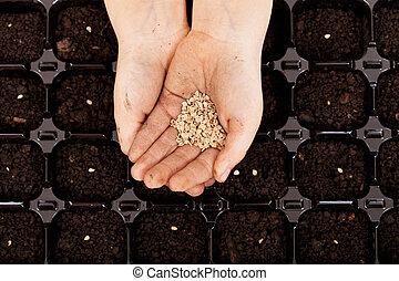 ser, sementes, sowed, mãos, criança