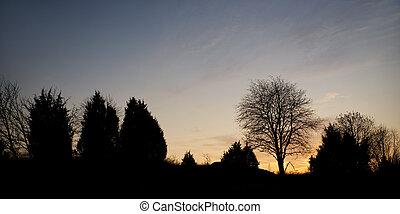sera, albero