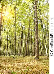 sera, autunno, wood.