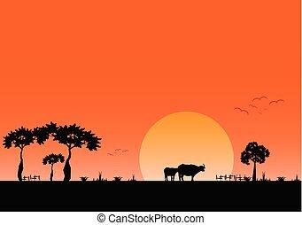 sera, campo, tramonto, fondo, paesaggio, vista