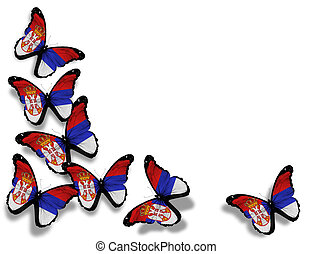 Serbia flag butterflies, isolated on white background