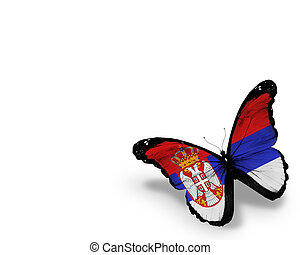 Serbia flag butterfly, isolated on white background