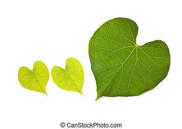 serce, śliczny, liść, kasownik modelują