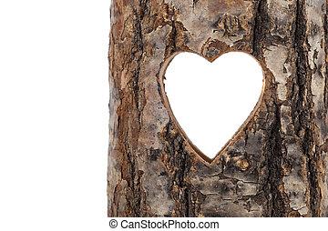 serce, cięty, drzewo, wydrążenie, tło, biały, trunk.