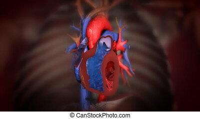 serce, do góry, ożywienie, krew, czyn, zamknięcie