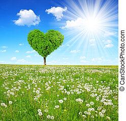 serce, drzewo, formułować