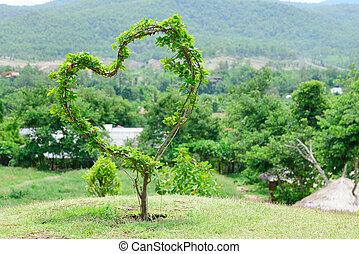 serce, drzewo, miłość