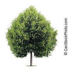 serce, drzewo