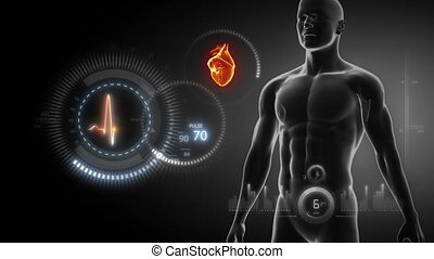 serce, ludzki, rentgenowski, skandować