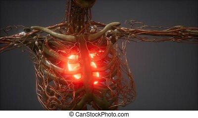 serce, ożywienie, ludzki, cg, chory