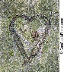 serce, pokrajany, drzewo