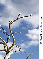 perch against blue sky